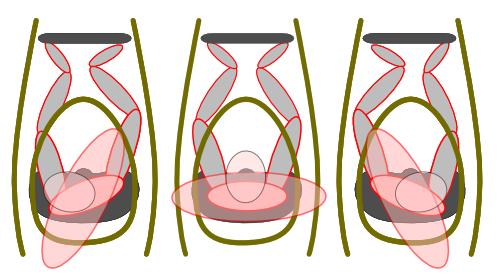hips rotation