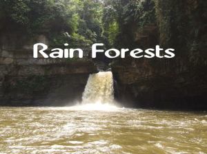 Rain Forest video